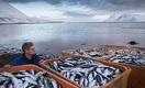 Минувшая неделя в Казахстане стала рыбной