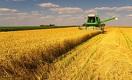 Казахстанская пшеница: урожай ниже, но лучше