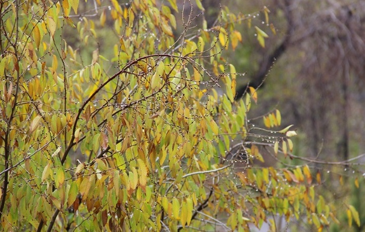 Погода 26сентября: дожди вцентре иназападе