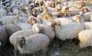 Почему Казахстан не может экспортировать мясо в Россию и Китай