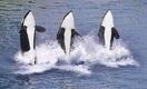 Три кита ВВП: Кашаган, обработка и инфраструктура