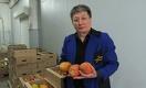 Как под Карагандой выращивают папайю, апельсины и грейпфруты