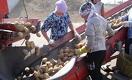 Как обеспечить Казахстан картофелем
