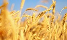 Сколько смогут заработать на органике аграрии Казахстана