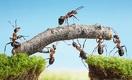 Как компаниям создать идеальный альянс, чтобы выжить в кризис