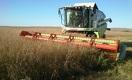 Казахстанская пшеница: ни цены, ни качества