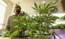 Marijuana Industry Projected To Create More Jobs Than Manufacturing By 2020
