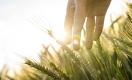Казахстанские аграрии теряют виды на урожай